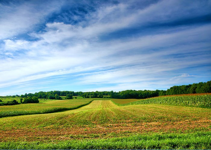 Field Greeting Card featuring the photograph Field Of Dreams Two by Steven Ainsworth