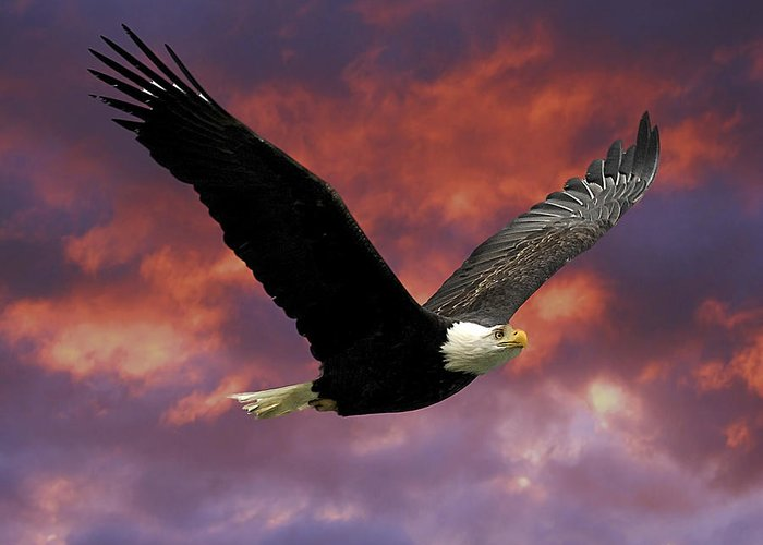 Eagle Greeting Card featuring the photograph Fire Cloud And Eagle by Clarence Alford