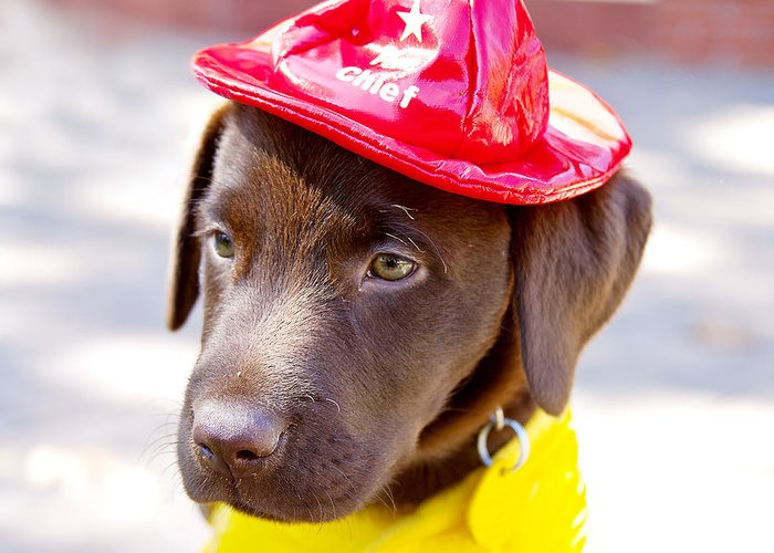 Dog Greeting Card featuring the photograph Firefighter Pup by Toni Hopper