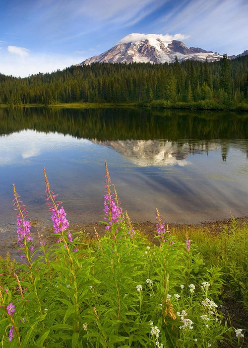 Fireweed Greeting Card featuring the photograph Fireweed Reflections by Mike Dawson