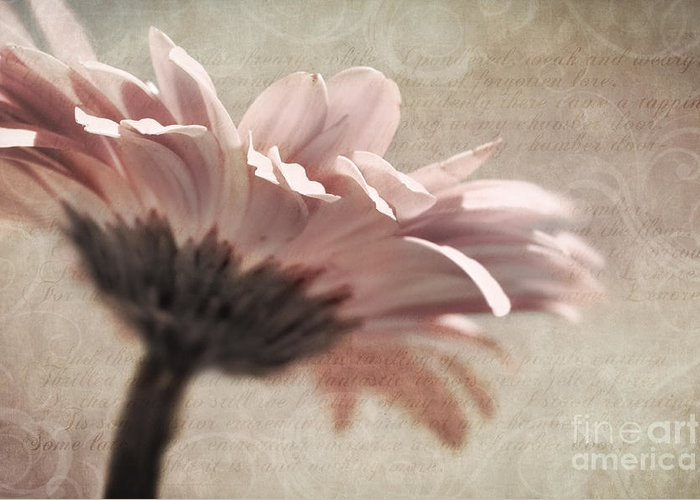 Flower Greeting Card featuring the photograph Flower Poetry by VIAINA Visual Artist