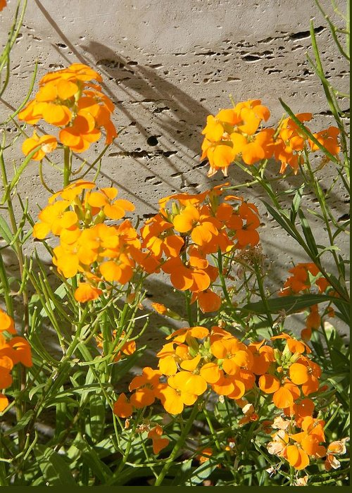 Flowers Greeting Card featuring the photograph Flowers Orange 2 by Warren Thompson