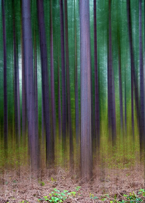 Forest Greeting Card featuring the photograph Forest Abstract02 by Svetlana Sewell