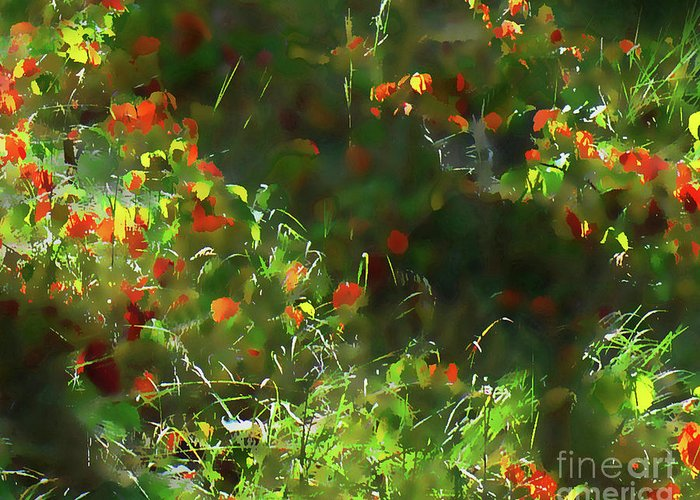 Abstract Greeting Card featuring the photograph Forest Floor Light by Terril Heilman