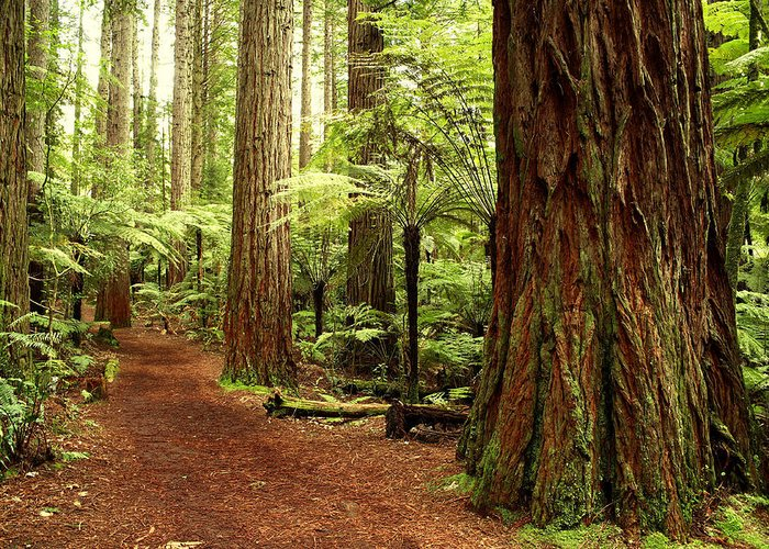 Hiking Trail Greeting Card featuring the photograph Forest by Les Cunliffe
