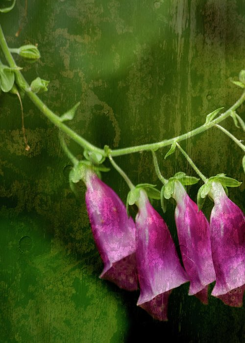 Flowers Greeting Card featuring the photograph Foxglove by Bonnie Bruno