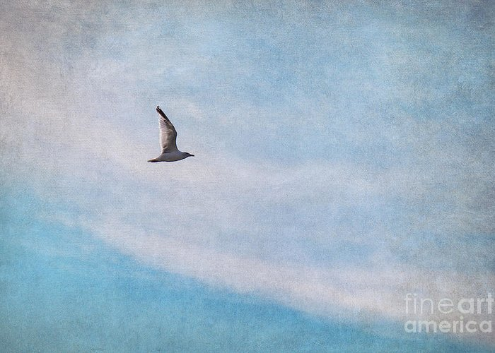 Gull Greeting Card featuring the photograph Freedom by Angela Doelling AD DESIGN Photo and PhotoArt