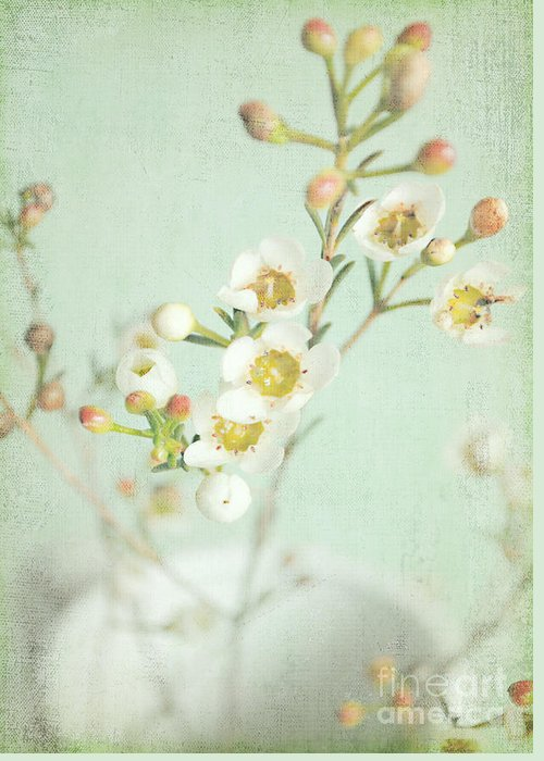Blossom Greeting Card featuring the photograph Freesia Blossom by Lyn Randle
