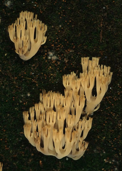 Nobody Greeting Card featuring the photograph Fungi Grows Out Of A Fallen Log In An by Michael S. Quinton