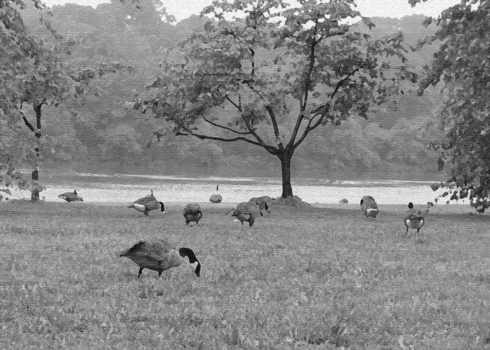 Philadelphia Greeting Card featuring the photograph Geese On A Rainy Day by Bill Cannon
