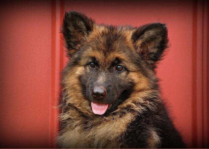 German Shepherd Greeting Card featuring the photograph German Shepherd Puppy - Queena by Sandy Keeton