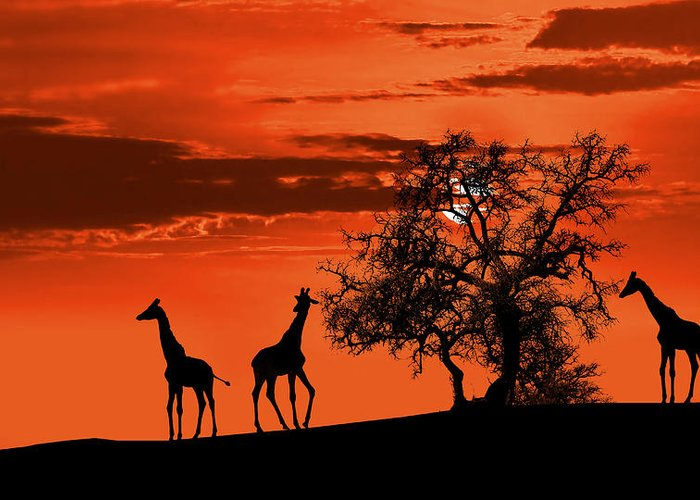 Africa Greeting Card featuring the photograph Giraffes At Sunset by Jaroslaw Grudzinski