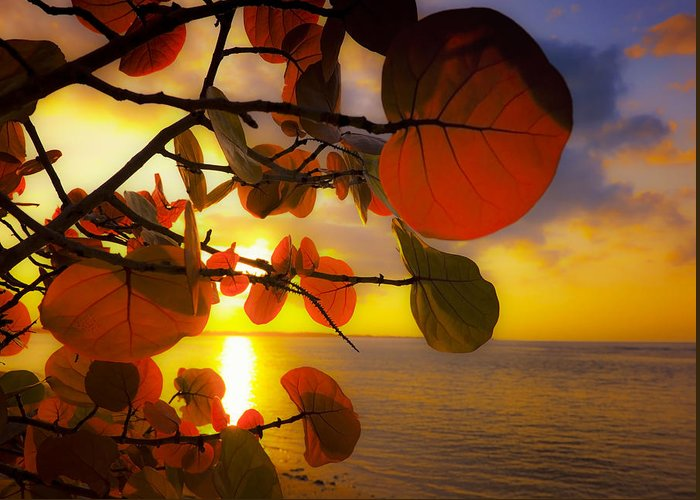 Beach Greeting Card featuring the photograph Glowing Red II by Stephen Anderson