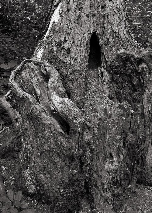 Tree Greeting Card featuring the photograph Gnarly by Jason Wolters