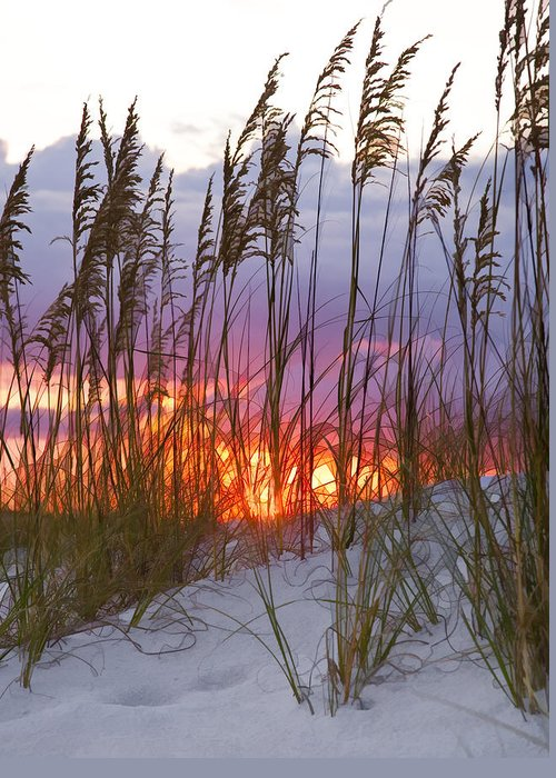 Sea Oats Greeting Card featuring the photograph Golden Amber by Janet Fikar