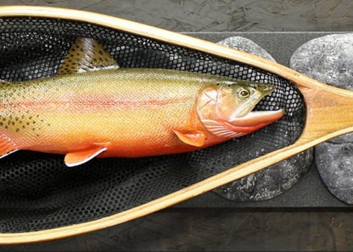Salmon Greeting Card featuring the sculpture Golden Trout River Slice by Eric Knowlton