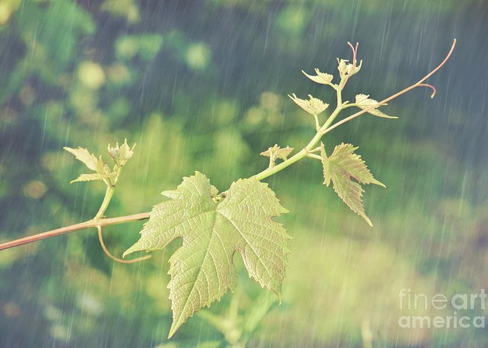 Agriculture Greeting Card featuring the photograph Grape Vine Against Summer Background by Sandra Cunningham