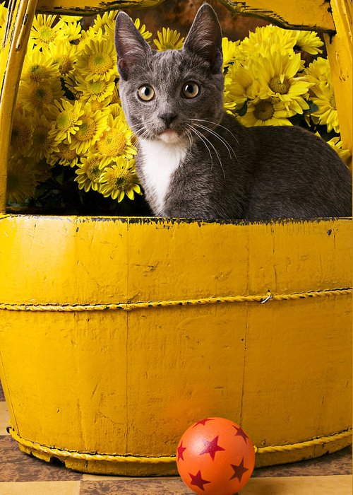 Kitten Greeting Card featuring the photograph Gray Kitten In Yellow Bucket by Garry Gay