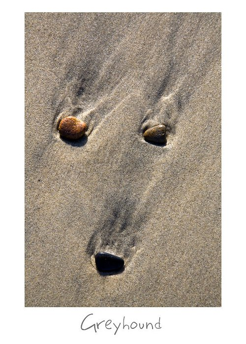 Beach Art Greeting Card featuring the photograph Greyhound by Peter Tellone