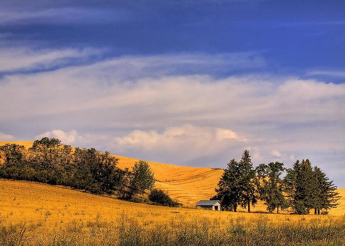 Landscape Greeting Card featuring the photograph Harvested by David Patterson