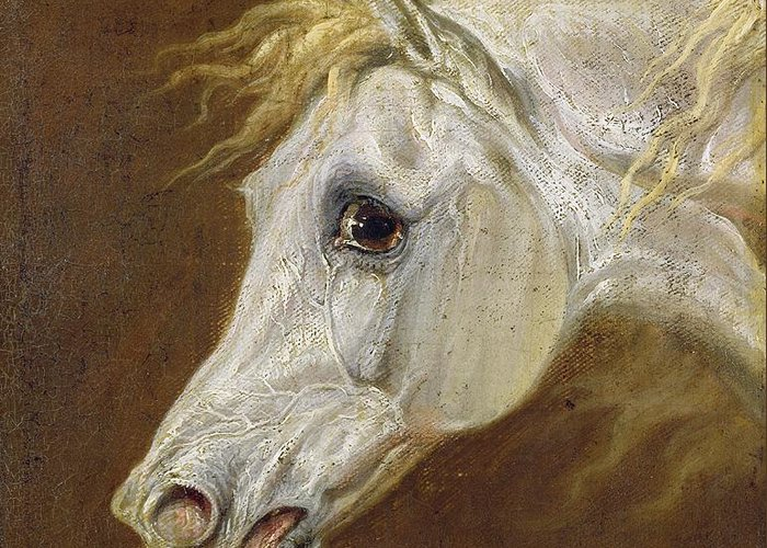 Head Greeting Card featuring the painting Head Of A Grey Arabian Horse by Martin Theodore Ward