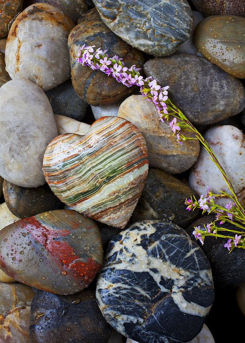Wet Greeting Card featuring the photograph Heart Stone With Wild Flower by Garry Gay