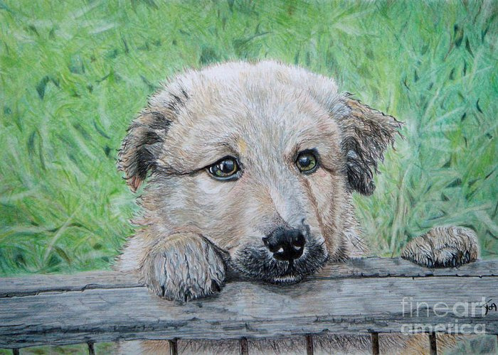 Puppy Greeting Card featuring the drawing Hello Puppy by Yvonne Johnstone