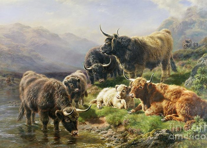 Highland Greeting Card featuring the painting Highland Cattle by William Watson