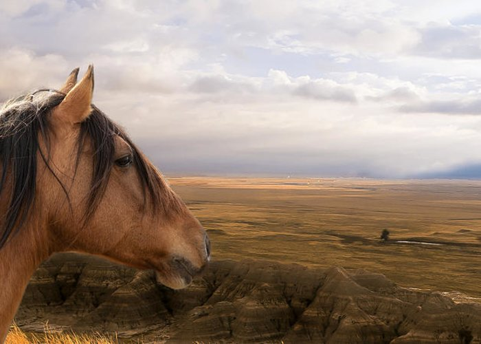 Equine Greeting Card featuring the photograph His Domain by Ron McGinnis