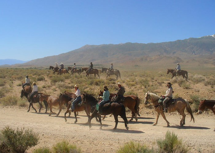 Horses Greeting Card featuring the photograph Horse Drive From June Lake To Bishop California by Christine Till