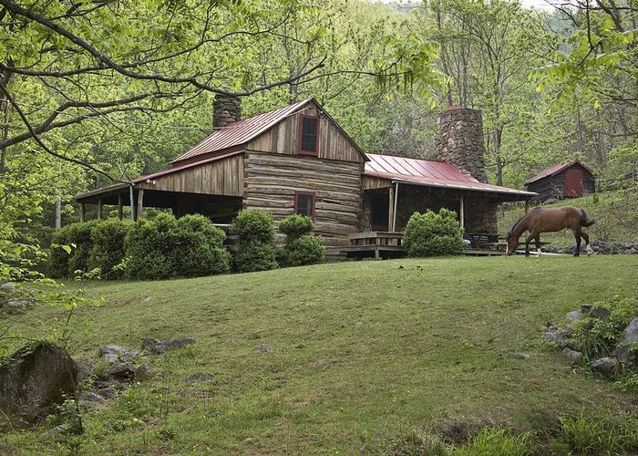 Day Greeting Card featuring the photograph Horse Grazing In The Yard Of A Mountain by Greg Dale