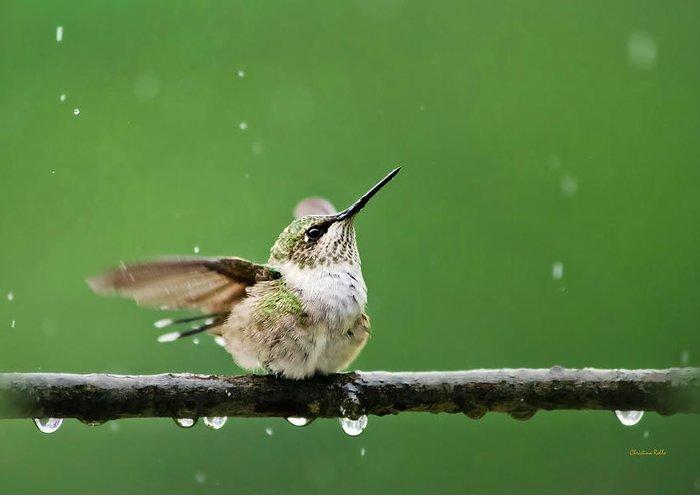 Hummingbird Greeting Card featuring the photograph Hummingbird In The Rain by Christina Rollo