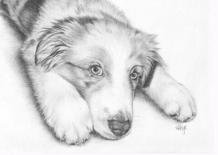 Australian Shepherd Greeting Card featuring the drawing I'm Sorry - Australian Shepherd Puppy by Heather Page