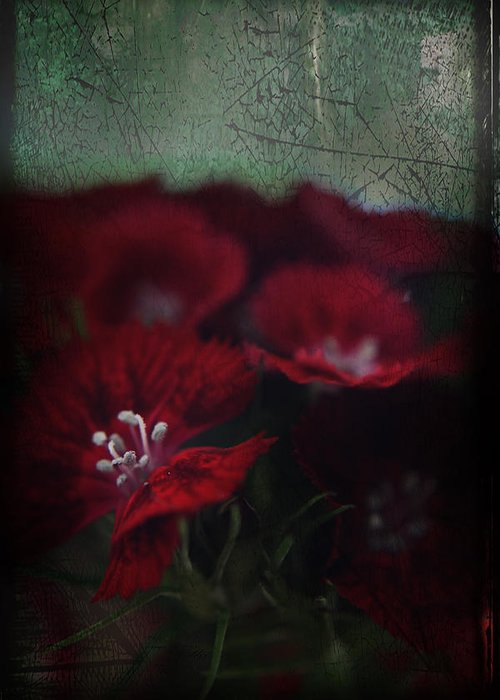 Flowers Greeting Card featuring the photograph It's A Heartache by Laurie Search