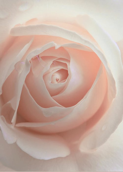 Rose Greeting Card featuring the photograph Ivory Peach Pastel Rose Flower by Jennie Marie Schell