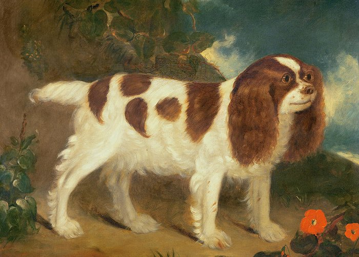 King Charles Spaniel Greeting Card featuring the painting King Charles Spaniel by William Thompson