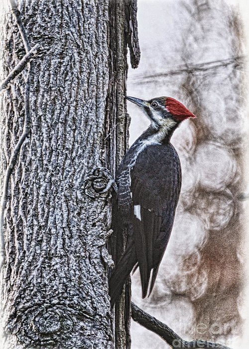 Woodpecker Greeting Card featuring the photograph Knock Knock by Lois Bryan