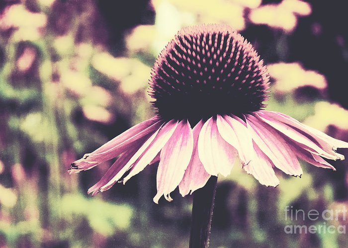 Echinacea Greeting Card featuring the photograph Last Summer by Angela Doelling AD DESIGN Photo and PhotoArt