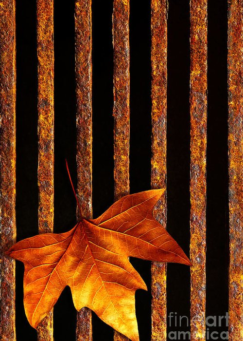 Abstract Greeting Card featuring the photograph Leaf In Drain by Carlos Caetano