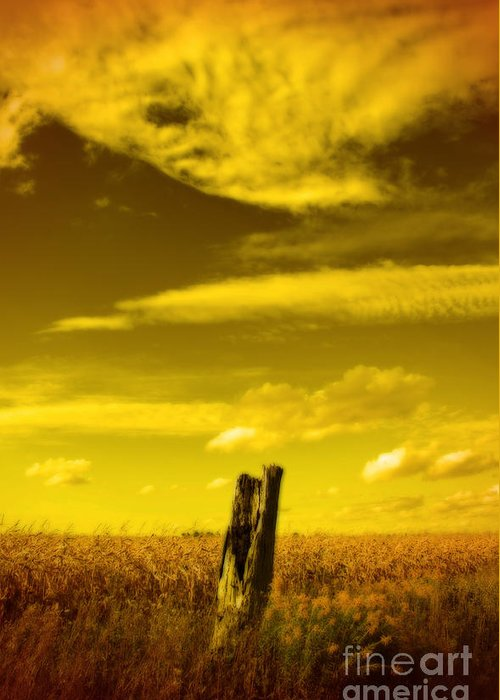 Corn Field Greeting Card featuring the photograph Left Alone by Cathy Beharriell