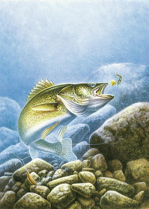 Jon Q Wright Greeting Card featuring the painting Lindy Walleye by JQ Licensing
