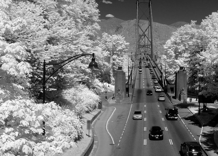 Infrared Greeting Card featuring the photograph Lions Gate Bridge Summer by Bill Kellett