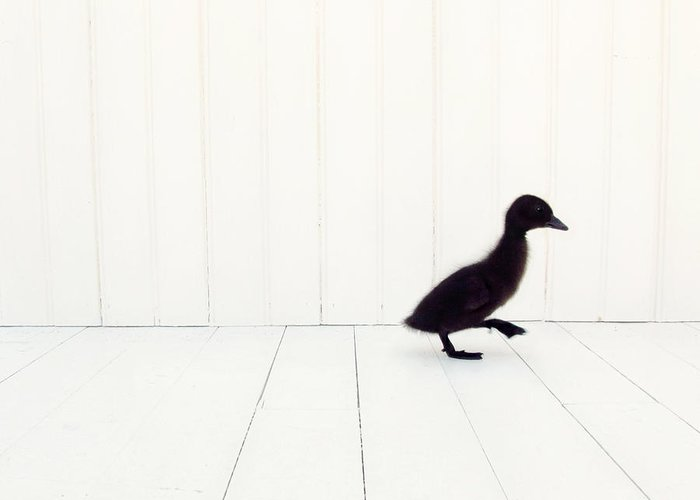 Duck Art Greeting Card featuring the photograph Little by Amy Tyler