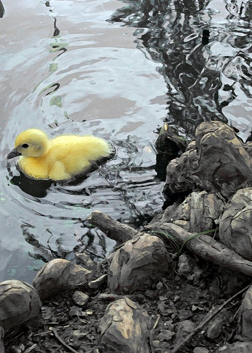 Duck Greeting Card featuring the photograph Little Ducky 2 by Angelina Vick