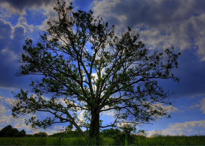 Tree Greeting Card featuring the photograph Lonely Tree by Kevin Hill