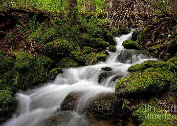Cascades Greeting Card featuring the photograph Lush Stream by Mike Reid