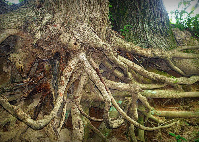 Tree Greeting Card featuring the photograph Medusa by Cricket Hackmann
