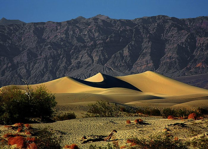 Death Valley National Park Greeting Card featuring the photograph Mesquite Flat Dunes - Death Valley California by Christine Till