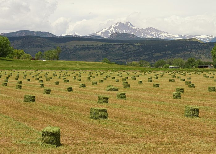 Country Greeting Card featuring the photograph Mid June Colorado Hay And The Twin Peaks Longs And Meeker by James BO Insogna