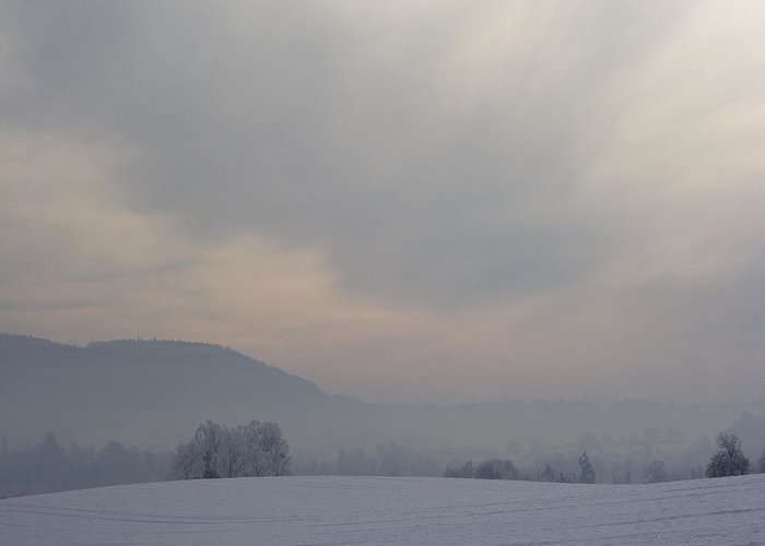 Winter Greeting Card featuring the photograph Misty Frosty Day by Angel Tarantella